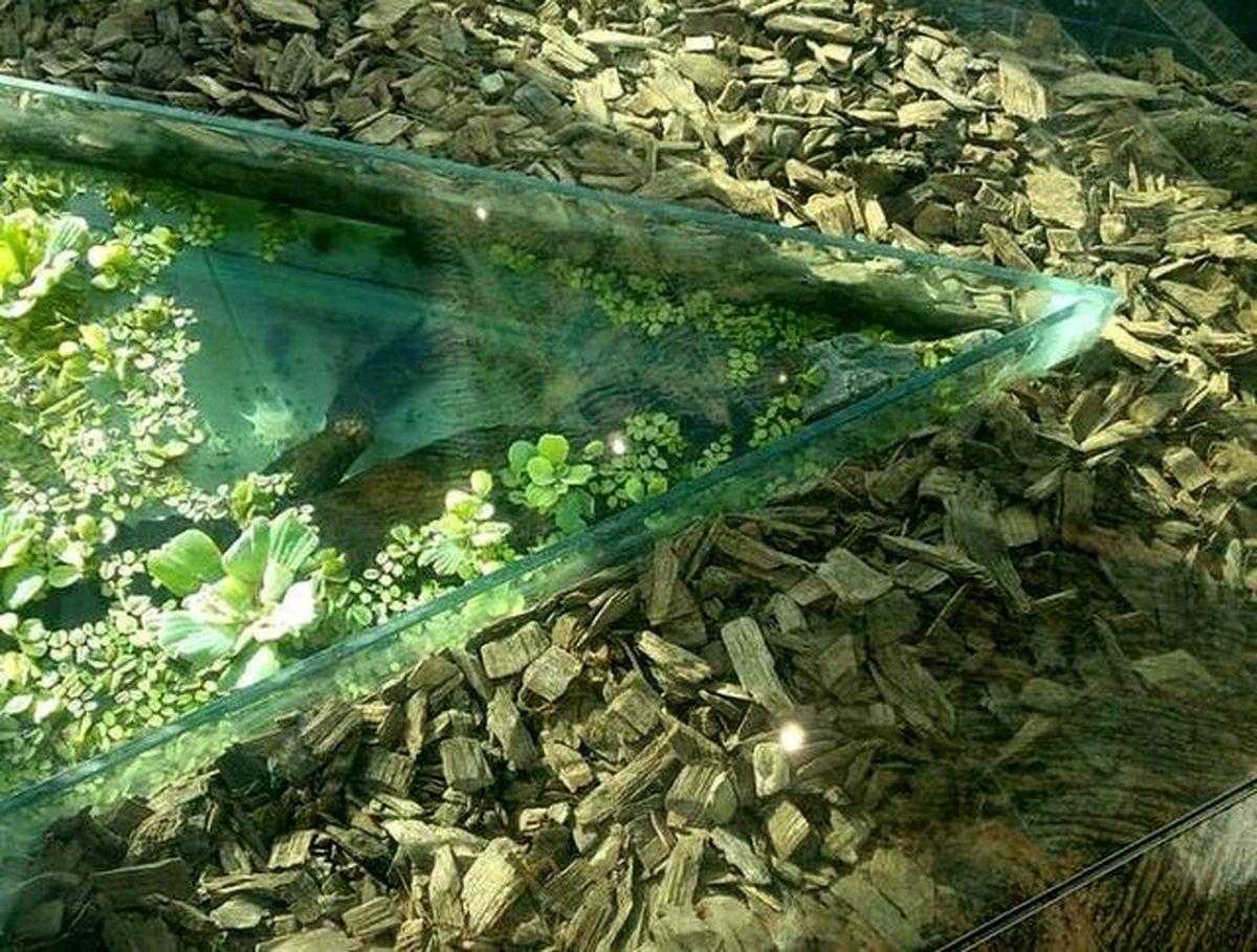 وحشت مردم از حضور تمساح در مرکز خریدی در غرب تهران + عکس